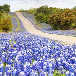 The first time I saw this stretch of road between Llano and Castell, Texas, I was pretty amazed at the beautiful colors. Bluebonnets with a few paintbrush mixed in stretched down and back up to where the road started down the hill again. I had to return here for better skies. My second trip was rewarded with patchy clouds over a sea of blue... well worth the extra effort.